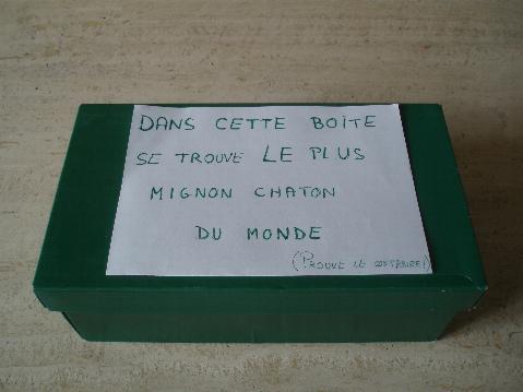 chaton-dantoine.JPG